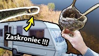 Pierwsze Ognisko w Lesie, Przyczepa Kempingowa i Szalone Zaskrońce !!! *polskie węże (Vlog #270)
