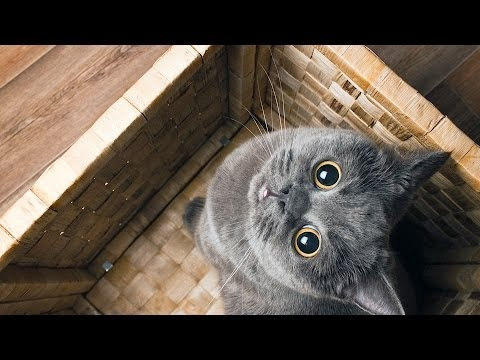 How To Deal W/ Cat That's Always Hiding | Cat Care