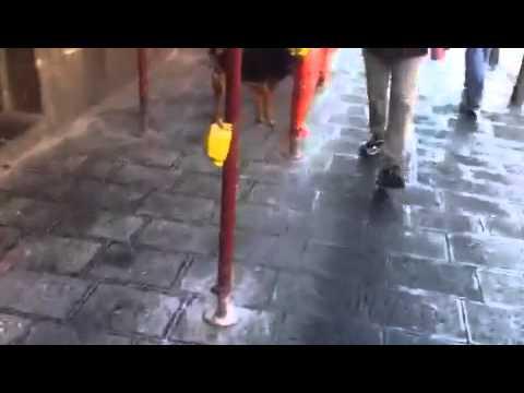Catania : cane randagio passeggia in Via Etnea..