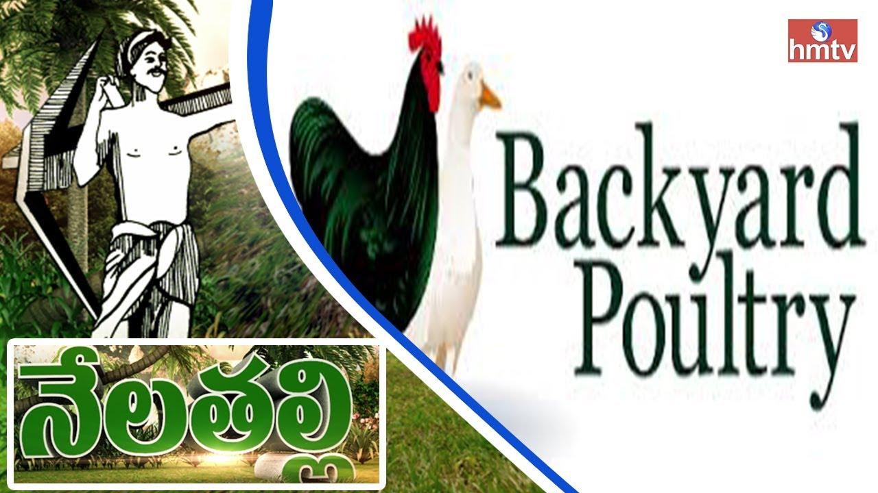 success story of natu kollu or backyard poultry farming by
