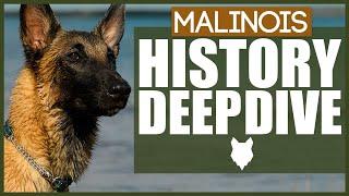 BELGIAN MALINOIS HISTORY DEEPDIVE