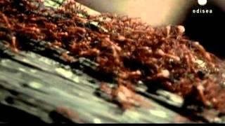 La revolución de los robots (Documental C.Odisea)