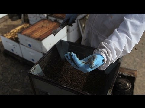 The $3 billion industry powered by bees | Fortune