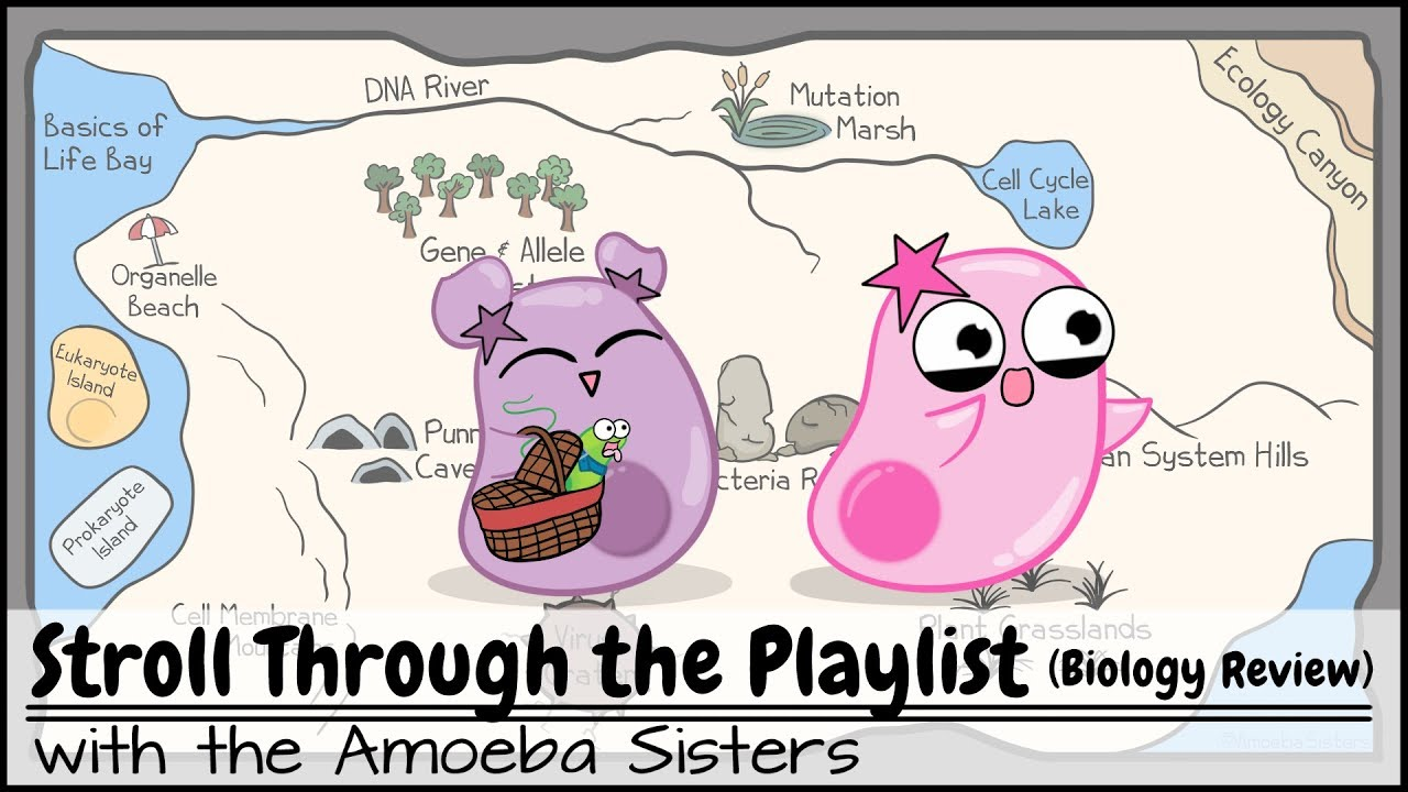 Download Stroll Through the Playlist (a Biology Review)