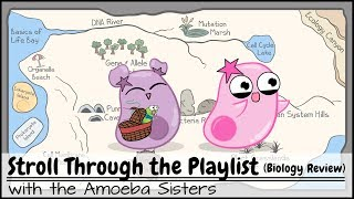 Stroll Through The Playlist  A Biology Review