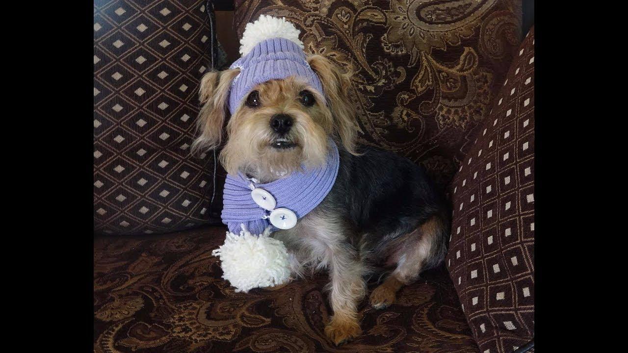 Perro Yorkshire terrier a crochet - Tutorial paso a paso ... | 720x1280