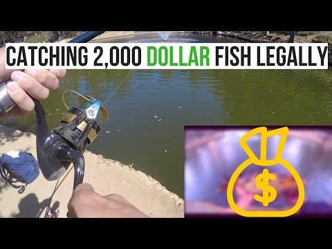 Pond Fishing For Carp In Thousand Oaks, California!!!