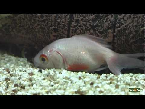Zieke vis - Mijn vissen - Tom&Co