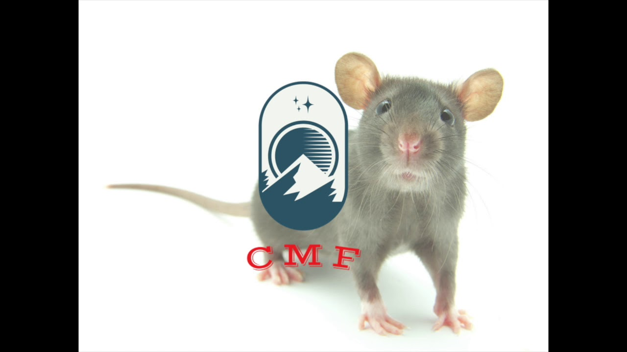 One Health | CMF Podcast 1.4