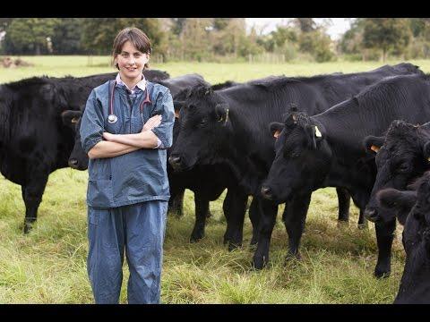 Ultrasound Machine for Cattle Breeders
