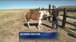 Mysterious horse deaths have family seeking answers / 2010.11.18  FOX 31 News