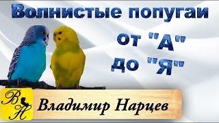#Волнистые попугаи от А до Я ч.3 Профилактика заболеваний.