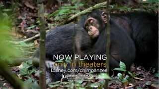 Chimpanzee - #1 Family Movie in America