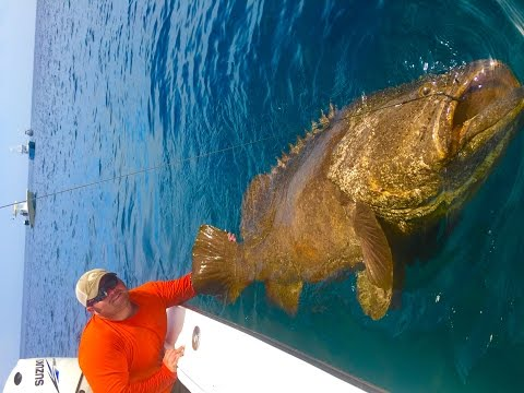 Hutchinson Island Goliath Grouper ft. Chew On This