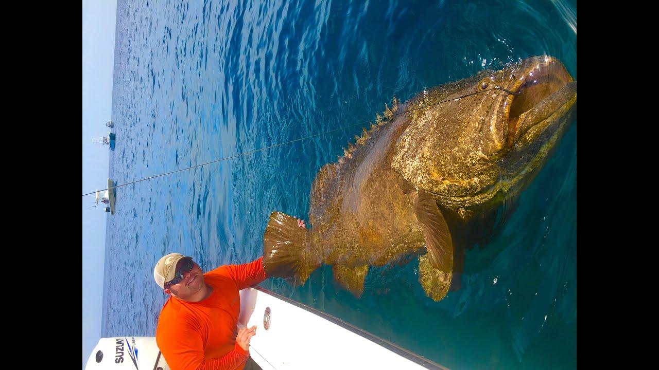 Sanibel Island Worlds Best Shelling Beaches additionally  besides Sea Turtle besides Goliath Grouper moreover Belize. on fish in captiva