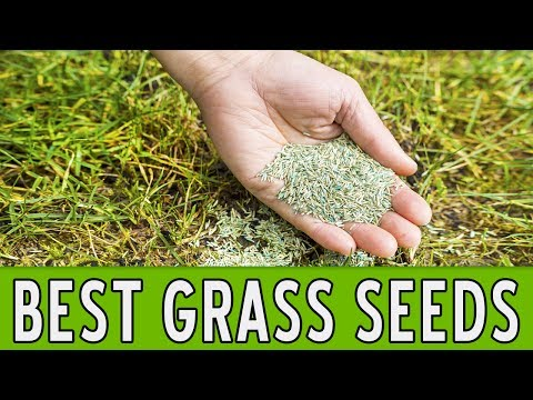 9 Best Grass Seeds 2018