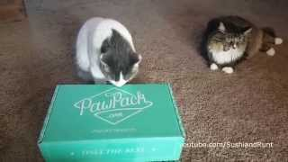 Paw Pack for Cats Unboxing #7 : Subscription Box for Pets thumbnail