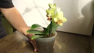 митя пропал, что делать? Ищем орхидейного кота