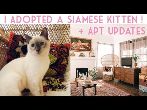 I Adopted A Siamese Kitten + Vintage Apartment Update | Emily Vallely