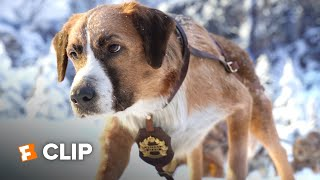 The Call of the Wild Exclusive Movie Clip - New Lead Dog (2020) | Movieclips Coming Soon