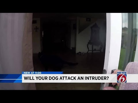 What would your dog do if an intruder entered your home?