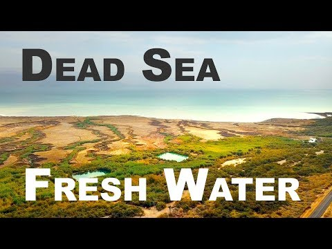 Fresh Water By The Dead Sea; Prophecy Fulfilled?
