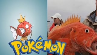14 Pokemon That Are Actaully Based on Real Life Animals