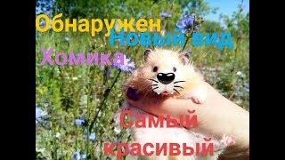 Фото хомяков.🐹🐹🐹