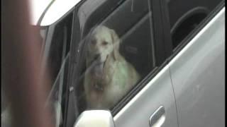 愛犬プリンはyukimiのキャンペーンにのんたんと一緒に」あなたに逢えて」と@六月の雨」聞いてくれます。