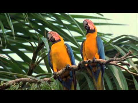 Download Macaw Breeders Podcast #12