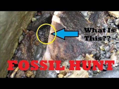 Strange Things Found On Fossil Hunt!? | Vlog #23