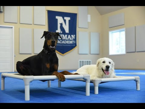 Sebastian (Doberman Pinscher) Boot Camp Dog Training Video Demonstration