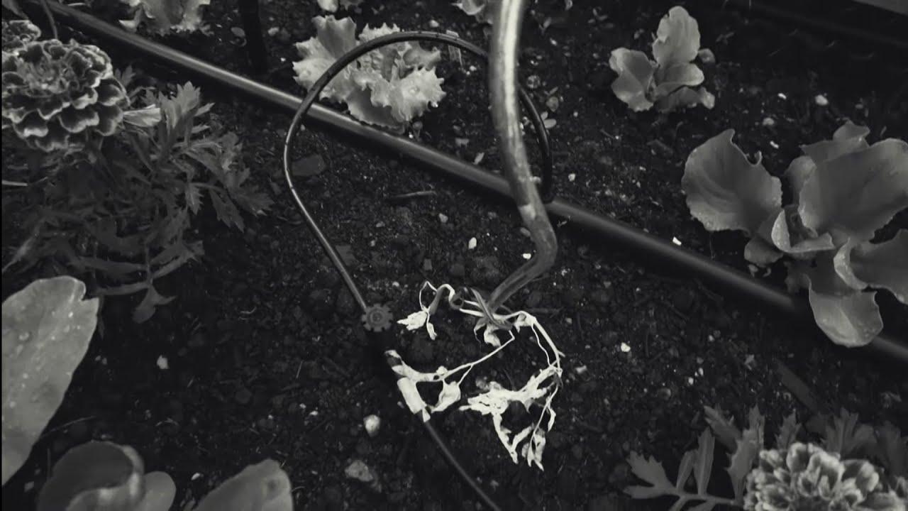 Velká série Lu zahradníkem: 6. díl: Půlka věcí mi chcípla😱🙈