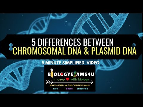 5 Differences Between Chromosomal DNA And Plasmid DNA