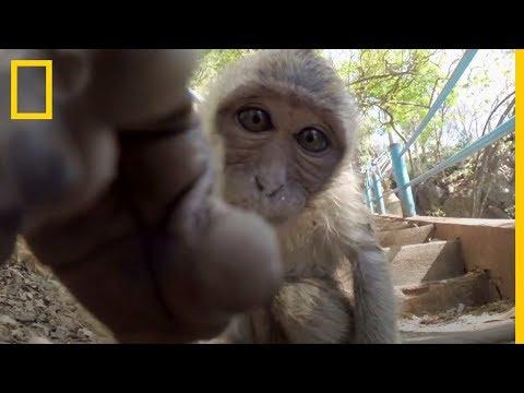 Los mejores y más DIVERTIDOS Selfies de ANIMALES | National Geographic en Español