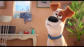 «Тайная жизнь домашних животных» — Одни любят кошек, другие - неправы: фильм в СИНЕМА ПАРК