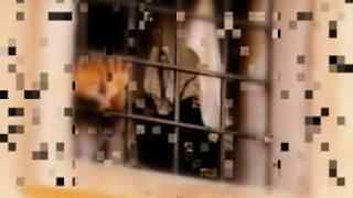 LINDOMAR CASTILHO - MURALHAS DA SOLIDÃO  - 1985