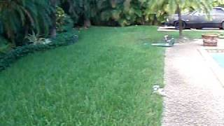 airboat vid1