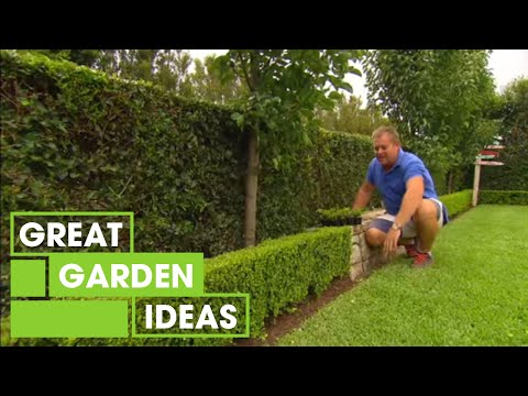 When to cut box hedges