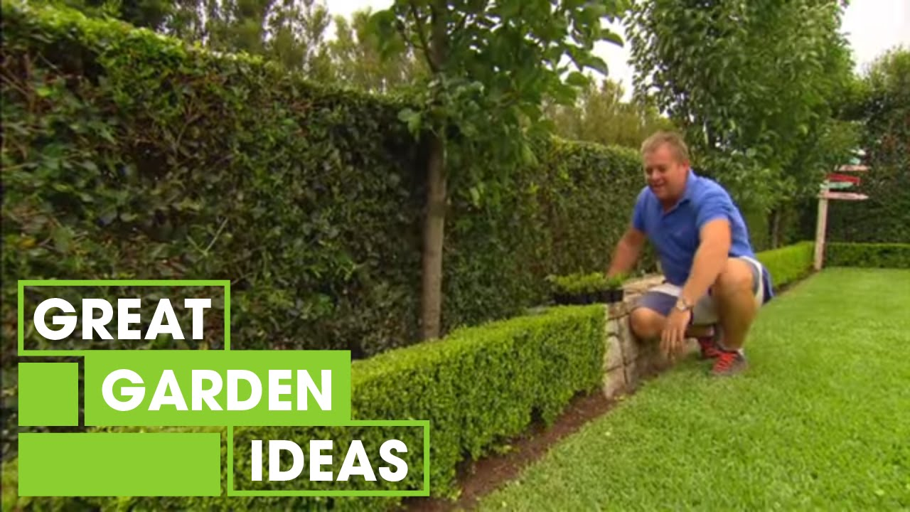 Tips Amp Tricks For Perfect Hedging Gardening Great Home