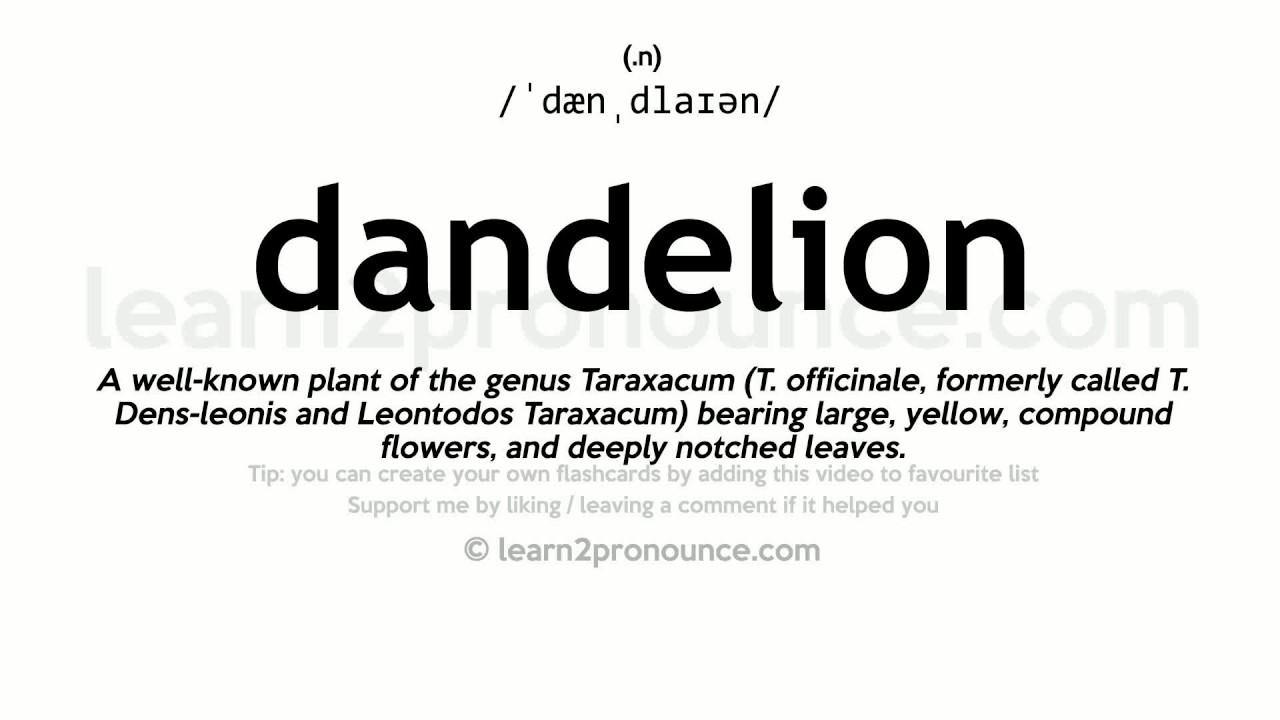 Pronunciation of Dandelion  Definition of Dandelion