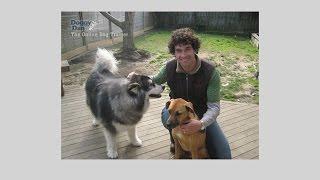 Dog Behavior Problems & What You Should Do About It? Correct Bad Dog Behavior