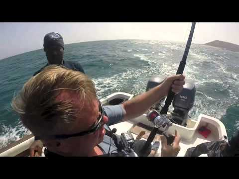 tiger shark cabo verde sport fishing & excursion