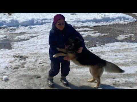 Dog travels 70 km across Nunavut to reunite with family