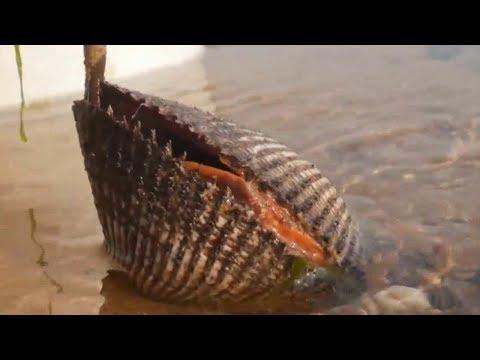 小章大雪天赶海,鼓包里的大毛蛤蜊、石缝里的章鱼捉的超过瘾呀!大丰收!【赶海小章】
