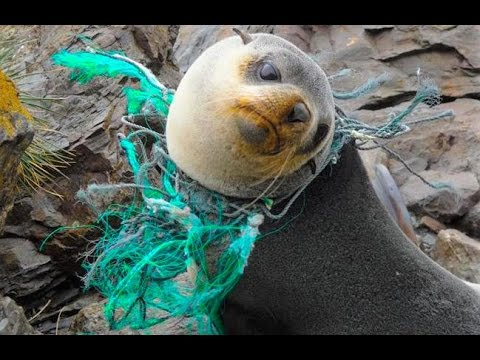 What is Ocean Pollution?