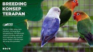 Download Video Breeding - Konsep - Terapan - Terapi Visi Ternak Lovebird © Efek Nganggur MP3 3GP MP4
