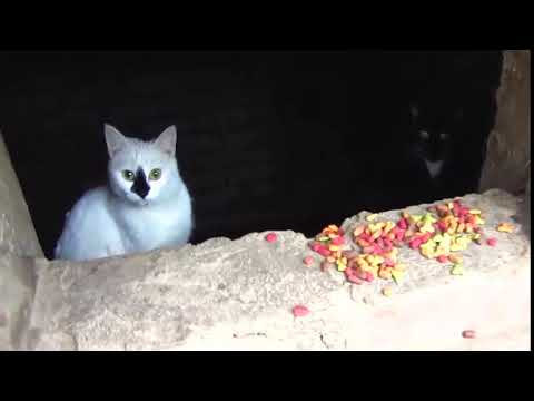 Scared cats jumping from basement6