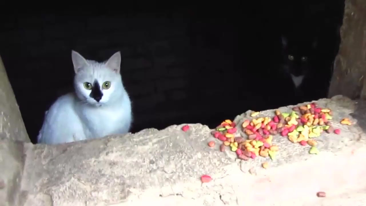 Scared cats jumping from basement6 | FunnyCat.TV