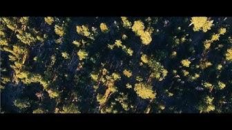 Plàsi - Sorrow (Official Music Video)